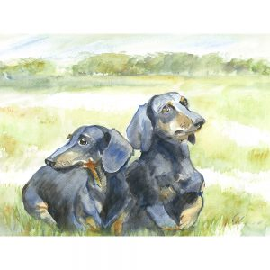 SG1519 dog dogs Dachshund field pose watercolour paint painting animal animals