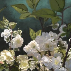 SG1564 white roses I floral flora nature Flowers botanical