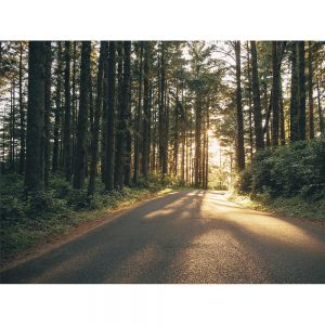 SG1587 pacific northwest oregon iii forest photography photograph nature path trees leaves leaf