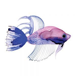 SG1766 tropical fish pink purple colourful