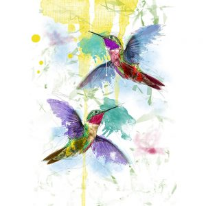SG1844 birds humming hummingbird paint painting colour splash drip wings fly