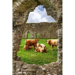 SG2002 ireland irish cows abbey ruins