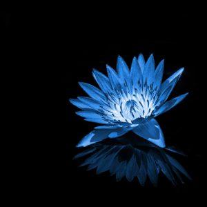 TM2823 flower petals reflection bright blue