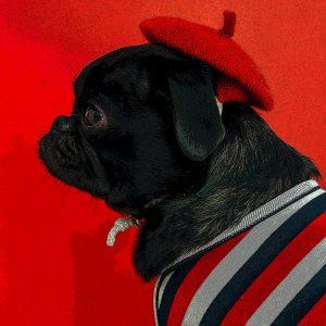 TM2851 dog hat coat red