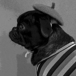 TM2852 dog hat coat mono