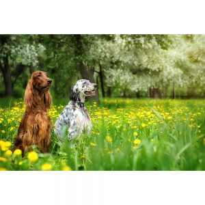 SG2785 dogs spring garden apple trees field dandelions
