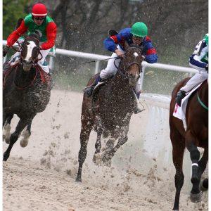 SG3006 horse racing dublin ireland