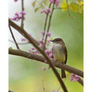 SG3252 bird tree branch wildlife